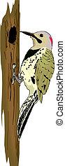 啄木鳥, 樹