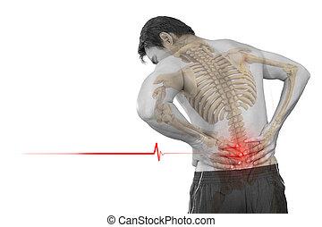 問題, 痛み, 背中, 慢性, 隔離された, 低い, 人, スケルトン