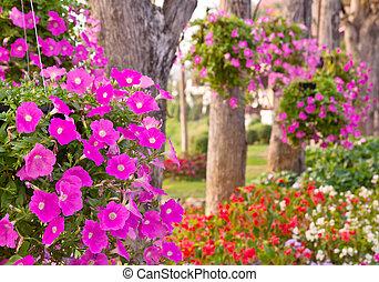喇叭花, 花