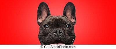 喜び, カメラ, 見る, フルである, ブルドッグ, フランス語, 犬