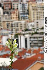 單個的花, 以及, 摩納哥, 看法
