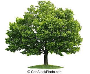 單個, 樹