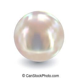單個, pearl., 矢量