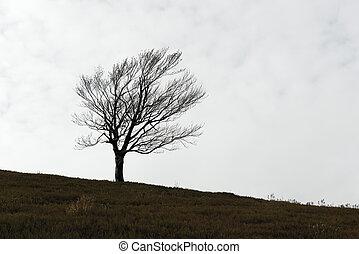 單獨, 樹, 黑色半面畫像