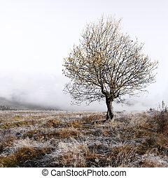單獨, 秋天, 樹