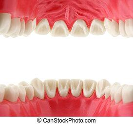 嘴, 由于, 牙齒, 裡面, 看法