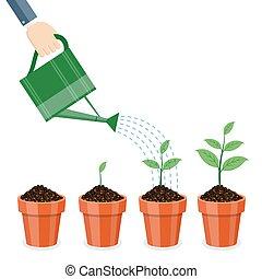 噴壺, 以及, 植物, 在, pots.