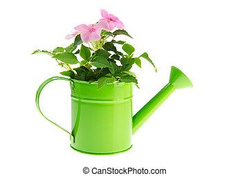 噴壺, 由于, 花