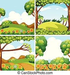 四, 領域, 場景, 樹, 自然
