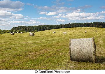 回転した, 小麦, 牧草地, の上
