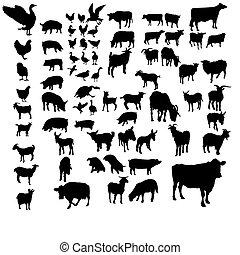 国内, セット, 動物