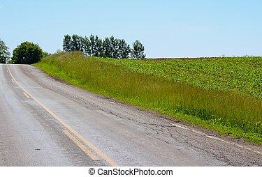 国, トウモロコシ畑, 道