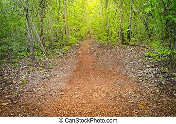 国, 動くこと, dawn., 落葉性, によって, 森林, 春, 道