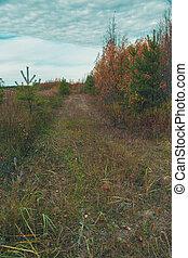 国, 大きくなりすぎた, grass., 低木, 側, 道