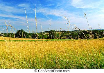 国, 牧草地, 風景