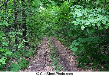 國家道路, 在, 森林