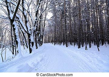 國家道路, 在, 森林, 在, 冬天