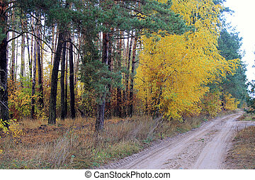 國家道路, 在, a, 美麗, 秋季森林
