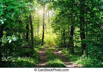 國家, 森林, 路, 夏天