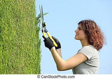 園丁, 婦女, 剪除, a, 絲柏, 由于, 修枝剪