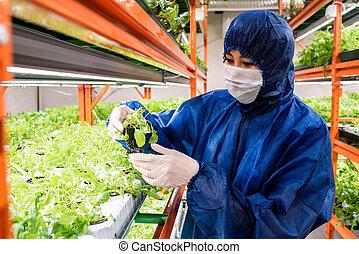 園芸である, sorts, 新しい, 選択, 植物, 研究者, 実生植物, 若い