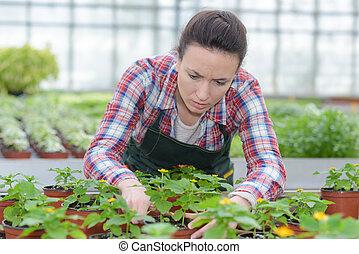 園芸家, 分類, 植物