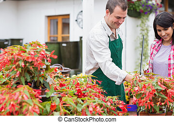 園芸用品センター, 植物, 顧客, 論じる, 労働者