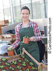 園芸, 女, 若い, 仕事, 温室