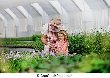 園芸, 祖父, 小さい, greenhouse., 女の子, シニア