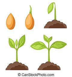圖像, growth., 階段, 旗幟, 植物, 站點, 集合, 网, 說明, 設計
