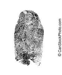 圖案, 白色, 被隔离, 背景, 指紋