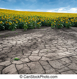 土の 腐食, ヒマワリ分野