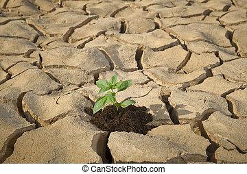土壌, 割れた