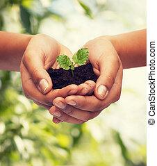 土壌, 植物, 女性の保有物, 手