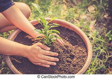 土壌, 植物, 緑, 手を持つ