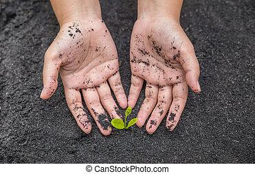 土壌, 苗木, 保有物, 表面, 手