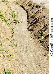 土壌, overgrazing, 浸食, 先導