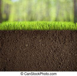 土壤, 在下面, 草, 在, 森林