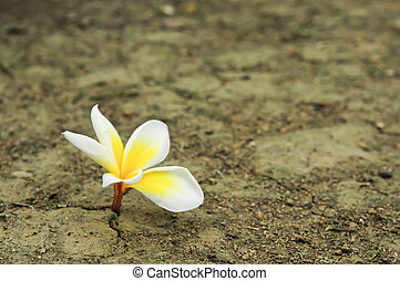 土壤, 被爆裂, 花, 干燥