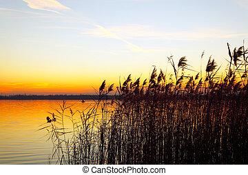 在上方, 天空, 針對, 傍晚, 陽光, 背景, 紙莎草