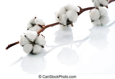 在上方, 白色, 棉花