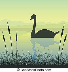 在湖上的天鹅