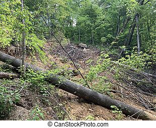 地すべり, 森林