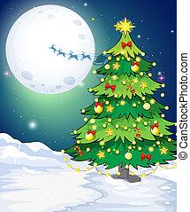 地位, 区域, 雪が多い, 木, 高い, クリスマス