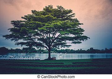 地位, 巨人, 孤独, 木, 湖, 日光, day., 緑の背景, 草, 雨