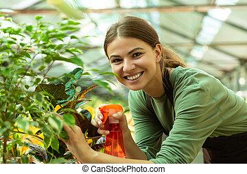 地位, 植物, 女, 温室, イメージ, 水まき, 若い, スプレーヤー, 花屋, 花, 上に