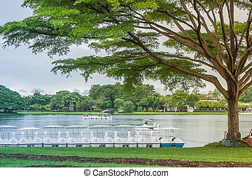 地位, ∥横に∥, 巨人, 孤独, ブランチ, カバー, 公園, 広がる, 木, それ, 湖, day., 緑は 去る, 雨, 影, 草, 公衆, 地面