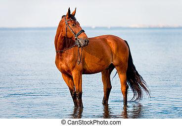 地位, 水, 馬, 顔つき, 湾