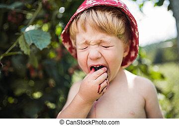 地位, 男の子, blackberries., 食べること, 庭, 酸っぱい, 屋外で, 小さい, 帽子, 夏