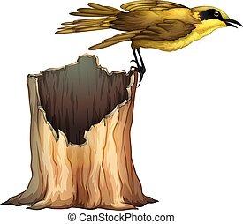地位, 鳥, 黄色, 丸太